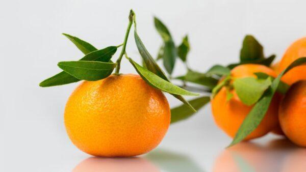 5 Mandarino giardino digitale