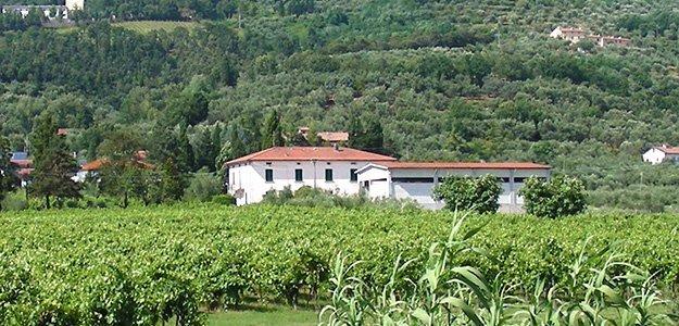 Marini Farm vino