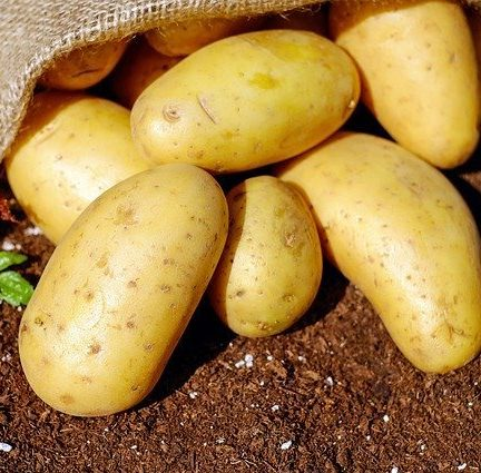 20b patate calabria sila 1 e1603118844284