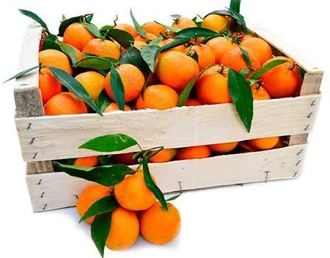clementine calabresi